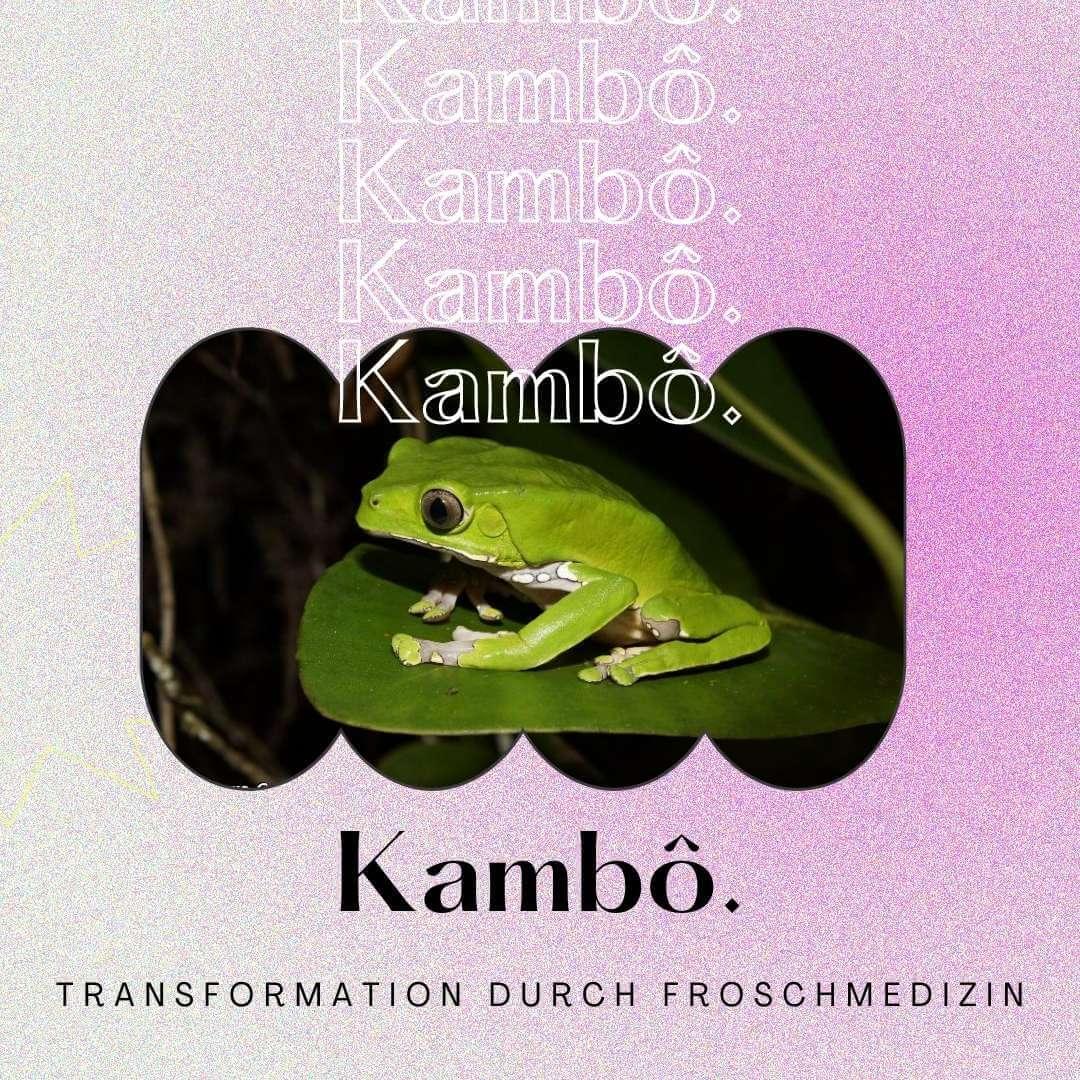 You are currently viewing Kambô-Zeremonie: Der ultimative Kambô-Guide – Meine Erfahrung mit der Froschmedizin